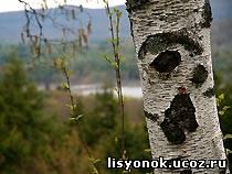 http://lisyonok.ucoz.ru/_bd/0/01193.jpg